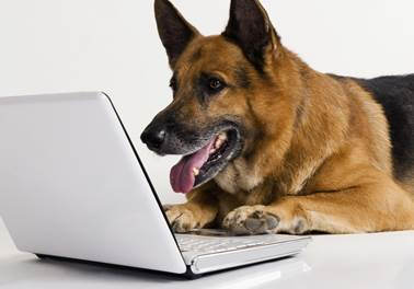 pets online shopping