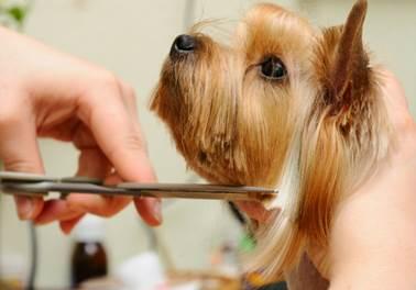 Banho e tosa: vale a pena trabalhar como tosador de animais?
