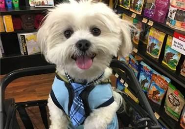 6 dicas para motivar a equipe do seu pet shop