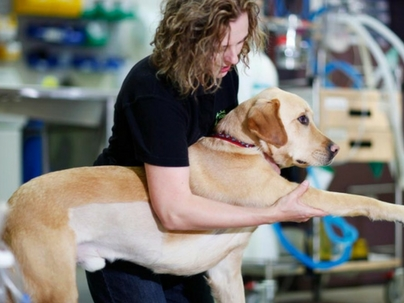 Mercado pet lucra com serviços como fisioterapia e acupuntura para animais