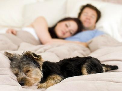 Humanização dos animais é responsável por crescimento do mercado PET