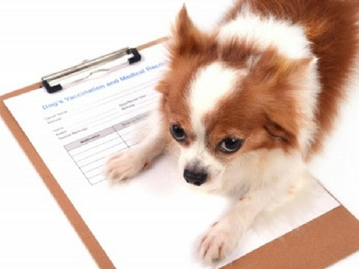 Contabilidade para Pet Shops: a eficiência na gestão, além do Banho e Tosa