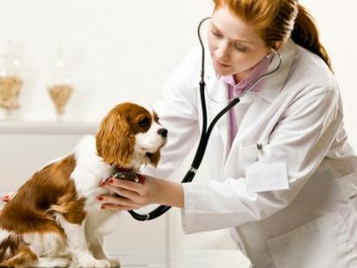 Então, você quer ter um hospital veterinário?
