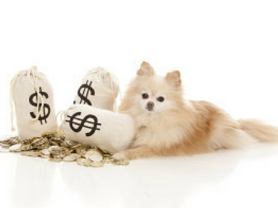 5 Dicas de Administração Financeira para seu Pet Shop