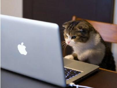 Contabilidade para Pet Shops: A eficiência na gestão, além do Banho e Tosa!
