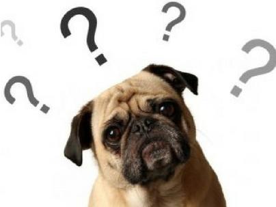 10 Dúvidas sobre Gestão de Clínicas Veterinárias e Pet Shops